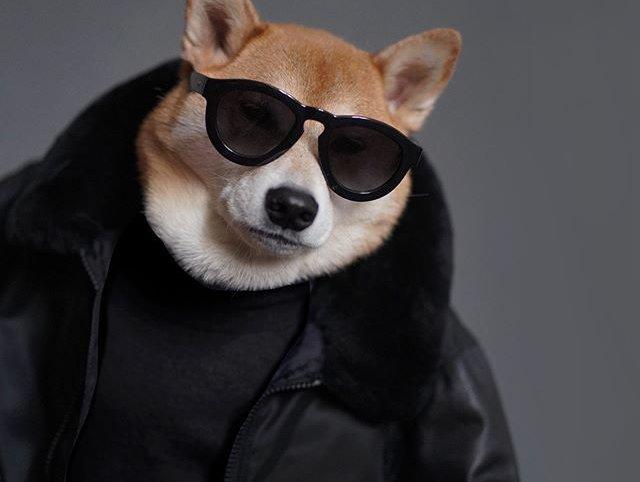 a cool dog